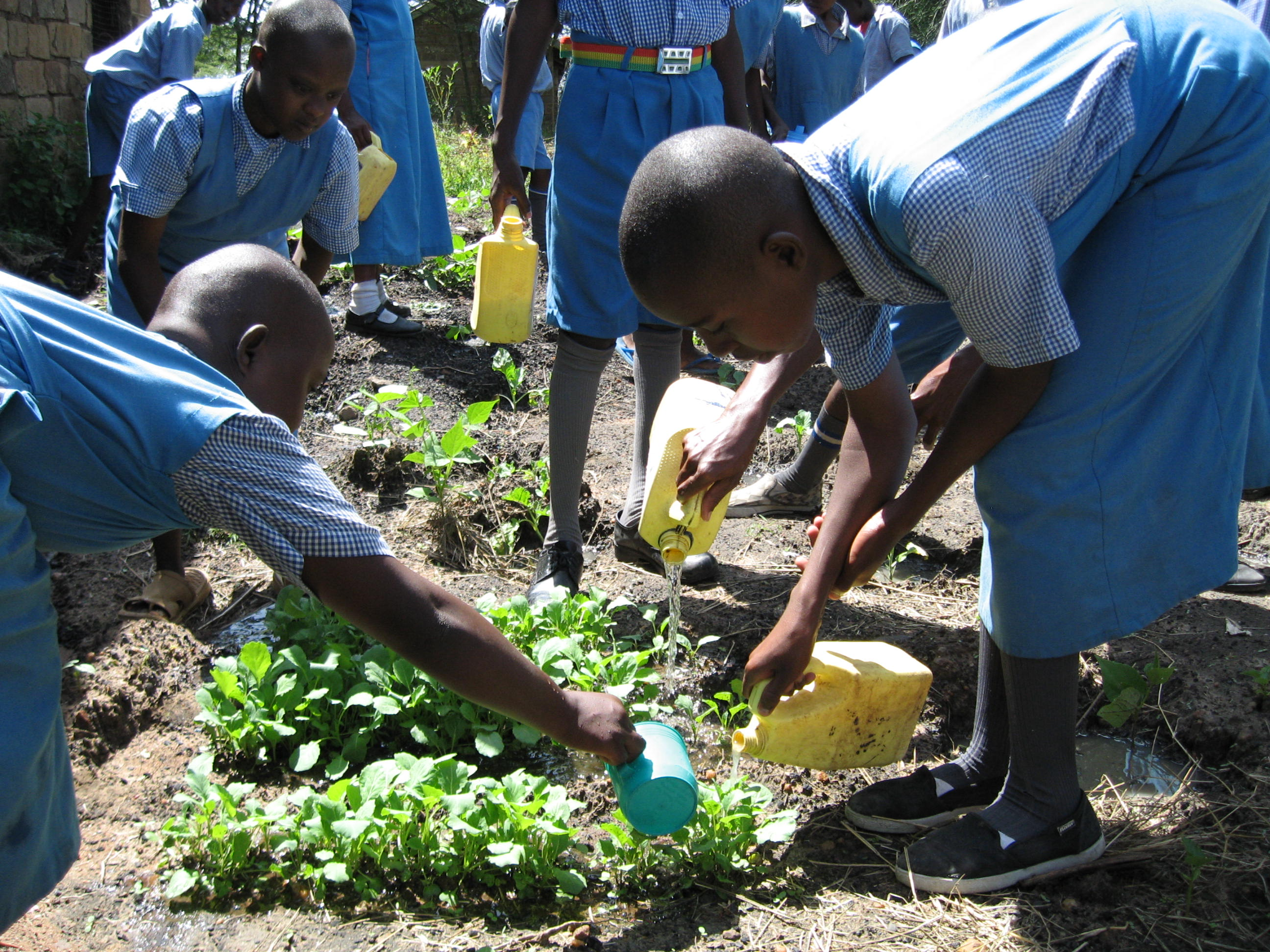 Pupils raising seedlings